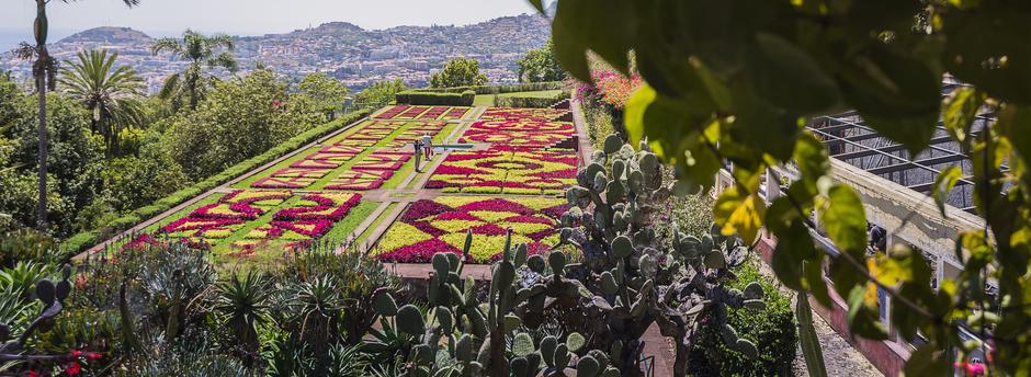 Holidays to Madeira : Botanical Garden of Funchal